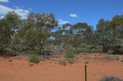 Paddington area, Sep 2006. Looks OK for grasswrens but none were found.