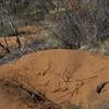 Bindi, 13/7/2002. Malleefowl mound
