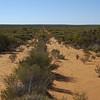Mallee shrubland, Bindi, S of Cobar, NSW