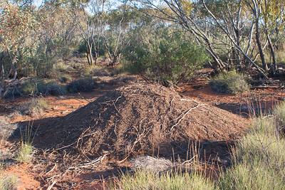 Malleefowl mound, Taringo, Sep 2006