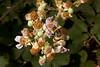 bumblebee_netas-0679
