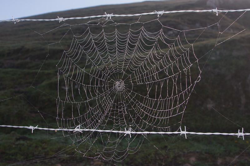 spiderweb_Rane;agh-3937
