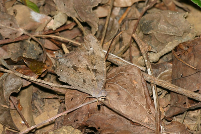 butterfly-0841