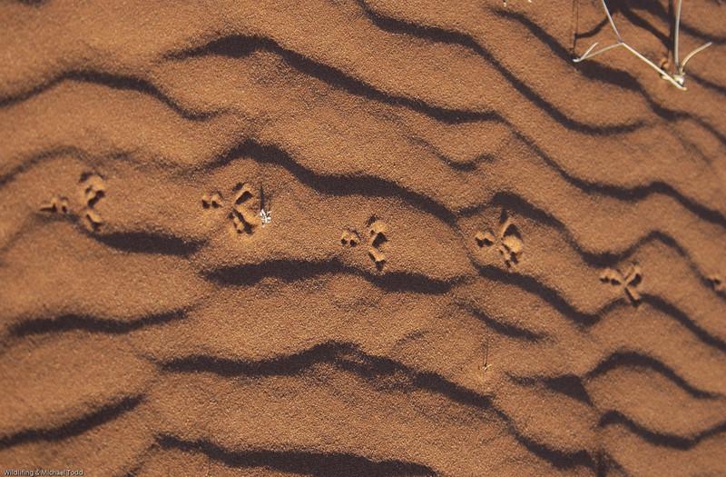 Footprints in the sand at Bollards Lagoon, SA
