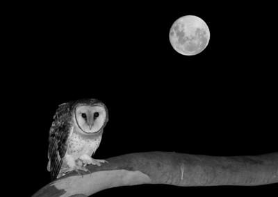 Nocturnal Wildlife