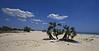 Too Hot Siesta ...<br /> Mozambique Bay, Madagascar