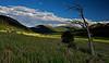 Under Old Mountains......Morraine park<br /> Rocky Mountain National Park, Colorado