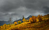 Fall colors in Telluride, CO