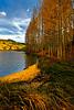 Aspen leaves on Lake