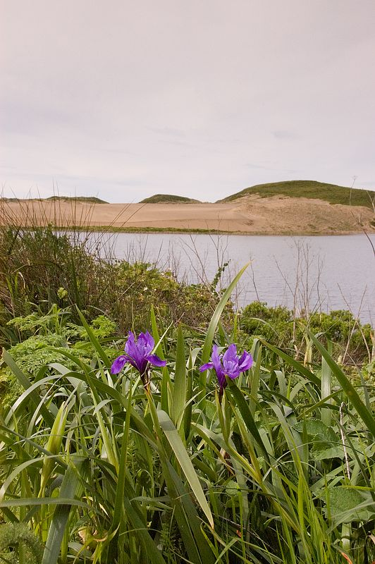 Wildflowers at Point Reyes National Seashore.