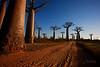 Baobab Street .....<br /> Morondava, Madagascar