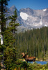 """Bull Moose in lake, mountains in background, Colorado<br /> """"Alces alces"""""""
