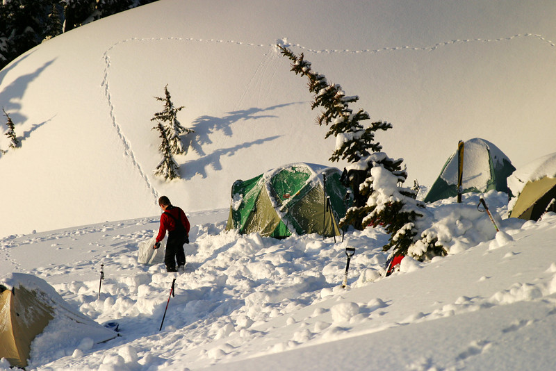 A group of tents on a winter camping expedition on Mt. Rainier. These tents were partially covered by snow from the evening before. In the background, a small animal has left a set of tracks in the fresh snow.