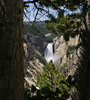 A view of Lower Yellowstone Falls framed through two trees.