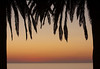 Two palm trees form a frame with an ocean and sunset in the background.