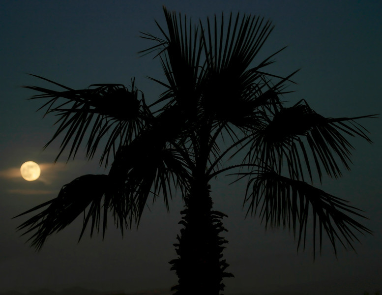 The moon with wisps of clouds higlights the black silhouette of a palm tree at night.