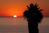 A palm tree at sunset flanked by the sun. The sun is misshapen as it just sliipping down over the horizon at dusk.