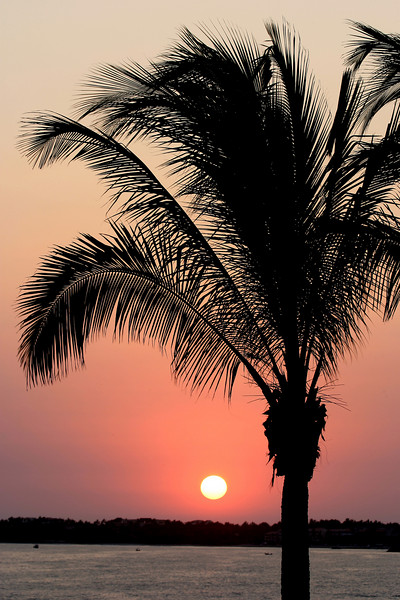 A tropical sunset with sun just about to drop below the horizon. The palm tree, in the foreground, is shown as a black silhouette against the red sunset.
