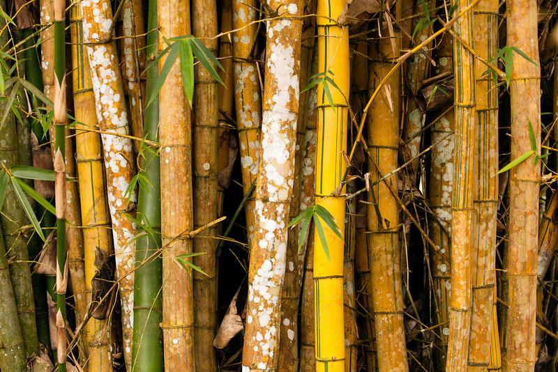 A small grove of tightly packed bamboo offers a nice background for a nature theme.