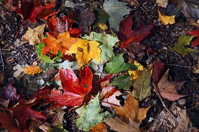 Forest floor - Algonquin Park
