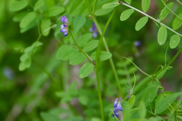 Barataria Nature Preserve - Jean Lafite National Park 3/19/11