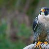 Taken in Mountsberg Conservation Area near Campbellville, Ontario