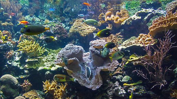 VIDEO - Jellies & More at Shedd Aquarium, Chicago