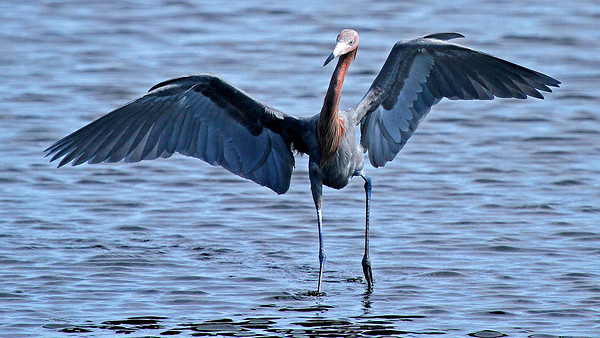 Wildlife of Merritt Island