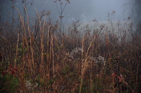Smokey Mts in WInter