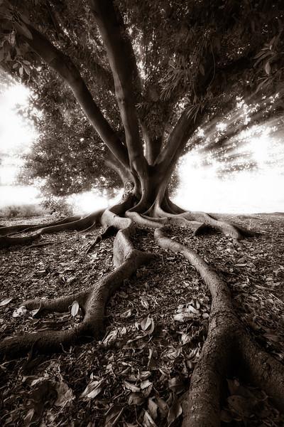 The Screaming Tree.