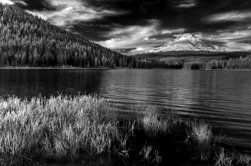 Grasses, Mt. Hood, Trillium Lake, Oregon