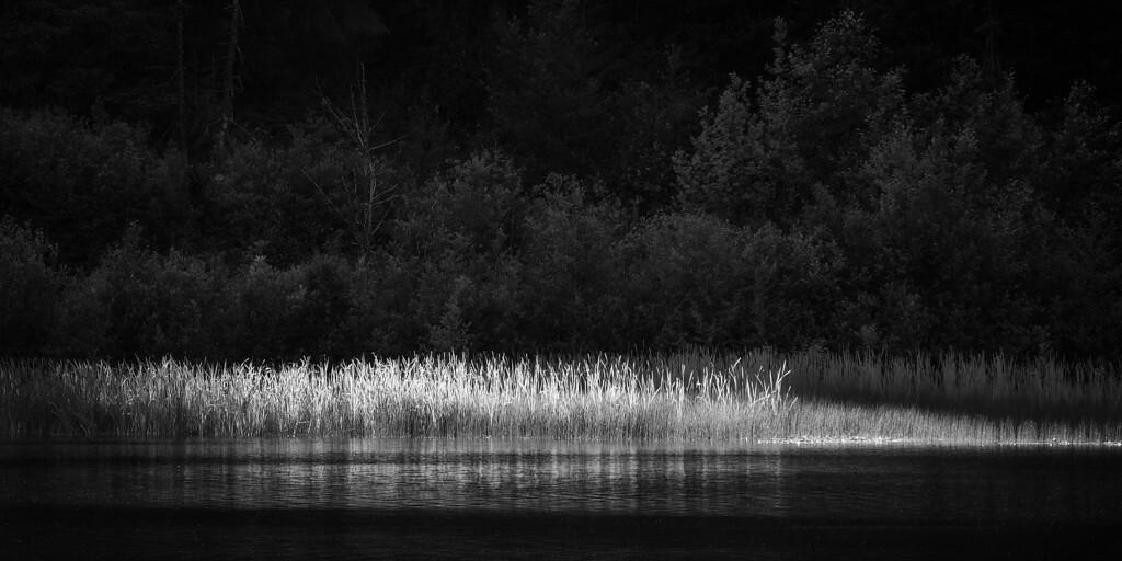 Light upon the wild grasses. Eastern Oregon.