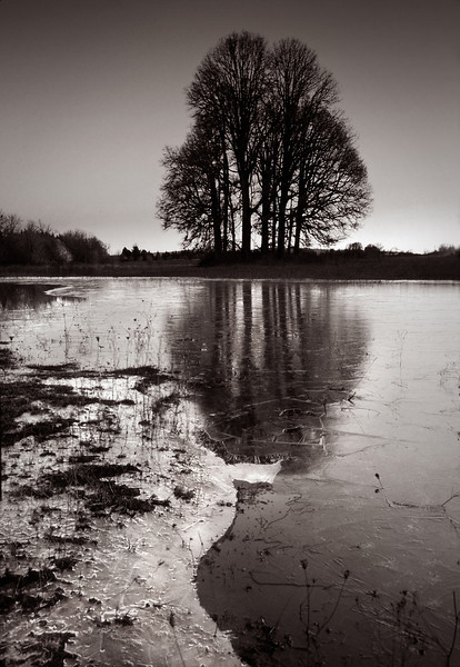 Ice and oak trees