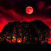 A full moon hovers over oaktree grove at sunset. shot with 400mm lens.<br /> © Douglas Remington - Ethereal Light Photography, LLC.  All Rights Reserved. Do not copy or download.