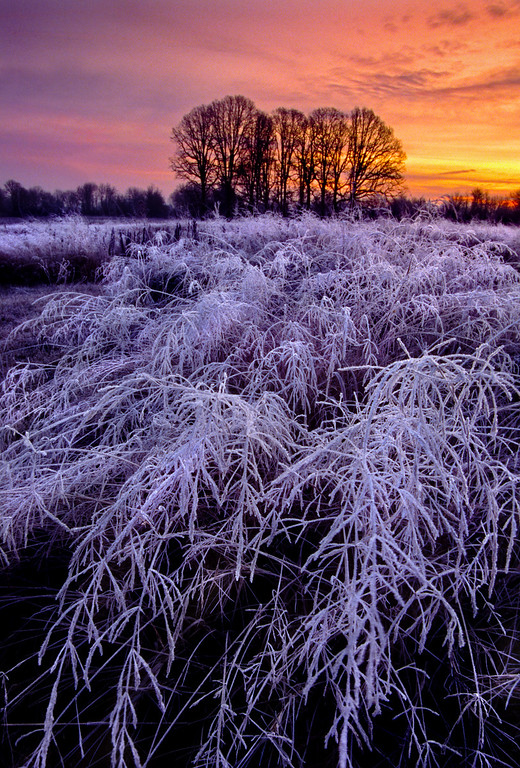 Frost and Fire, winter freeze and sunrise<br /> © Douglas Remington - Ethereal Light Photography, LLC.  All Rights Reserved. Do not copy or download.