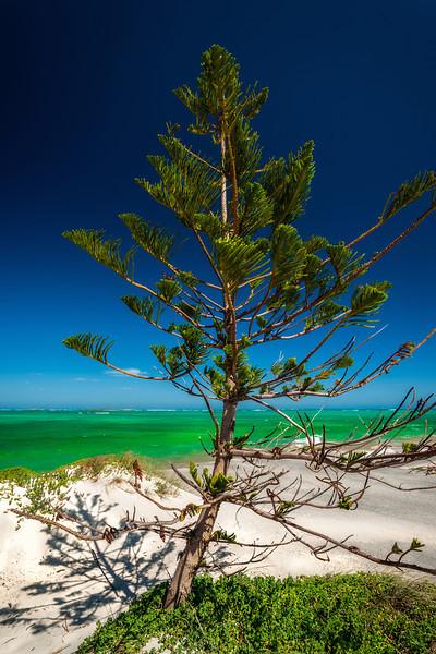 norfolk pine, indian ocean,