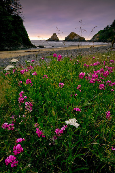 Wild flowers, Oregon Coast.