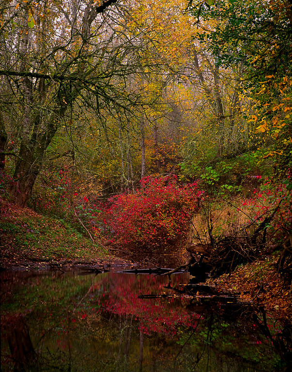 Autumn at ye old fishing hole, Dairy Creek, Western Oregon<br /> © Douglas Remington - Ethereal Light Photography, LLC. All Rights Reserved. Do not copy or download.
