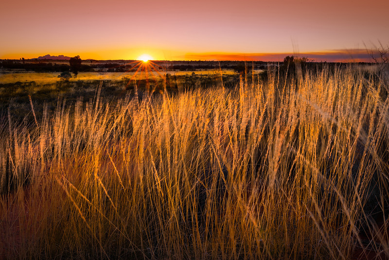 Sunset with spinifex, Uluru-Kata Tjuta national park, Australia.<br /> <br /> © Douglas Remington - Ethereal Light Photography, LLC. All Rights Reserved. Do not copy or download.