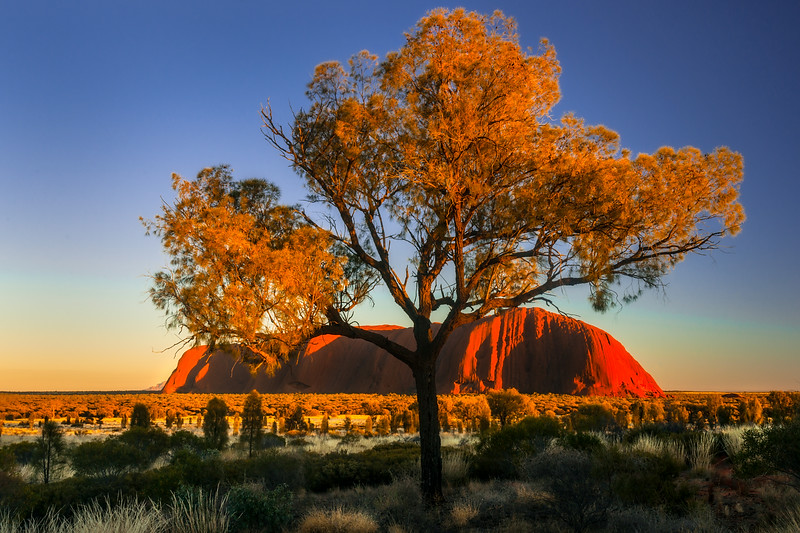 Uluru and desert oak