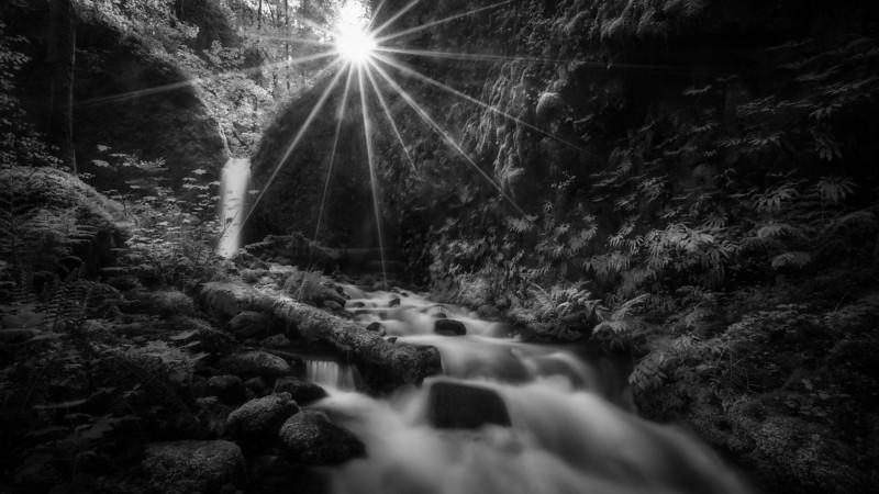 Mossy grotto sunstar