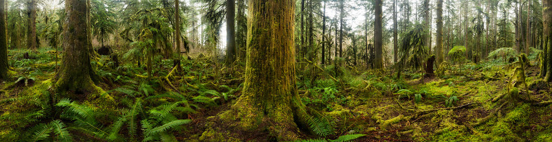 Oregon rainforest. 360 degree panorama<br /> <br /> © Douglas Remington - Ethereal Light® Photography, LLC. All Rights Reserved. Do not copy or download