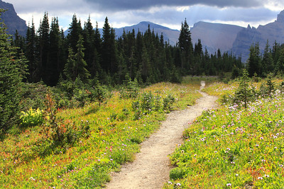 Trail near Logan Pass Glacier National Park