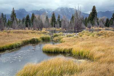 Schwabacher Landing near the beaver dam