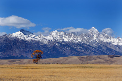 The Tetons from the National Elk Reserve in Jackson Wyoming