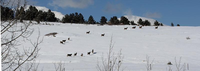 Deer near Horn Creek Lodge