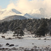 Lone Bull Elk in Winter Scenic Landscape