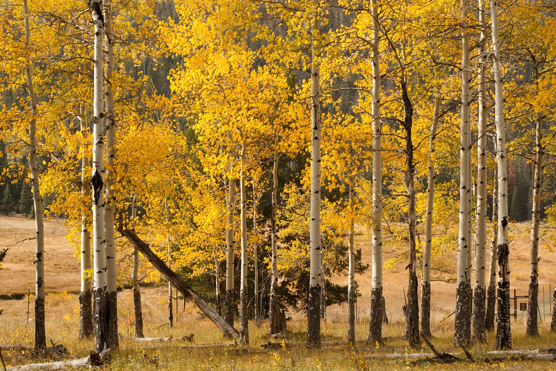 Fall trees in Rocky Mountain National Park