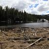 Lake near the Petrified Tree in Yellowstone