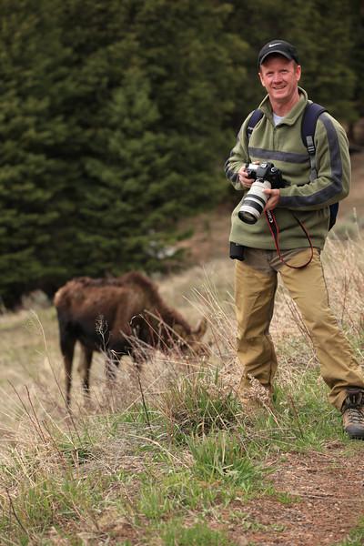Moose near Petrified Tree in Yellowstone